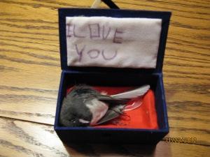bird casket
