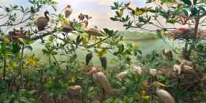 A Diorama of Florida's Cuthbert Rookery.