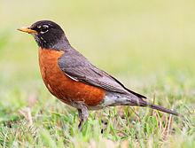 Ava's Bird